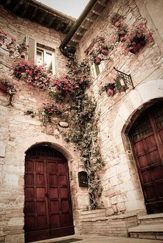 love the vine, the flowers, the hues in this picture, the fact that it's a corner and you feel trapped. it's a great photo.