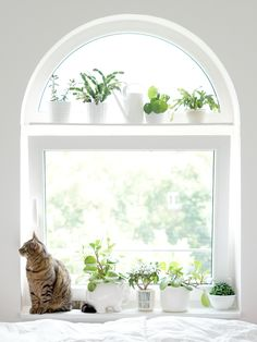Urban Jungle Bloggers - living with plants and cats