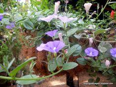 KarinseGriffels: Koffie in my tuin