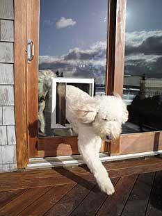 Dog door for glass doors