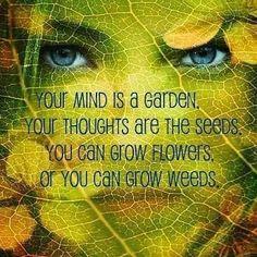 Your #mind is a #garden... Grow #flowers!!     #yourthoughts #goodthoughts #positivity #foundonpinterest #bemindful #beaware #beauty #awareness #mindfulness #wisdom #wisdomquotes #instaquote #instaquotes #bepositive #believe #believeinyourself #higherconsciousness #yourjourney #yourpath #bejoyful #beinspired #beblessed #namaste #mooncho #yingyangliving #yingandyangliving