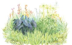 Got mud? A bog garden solves a soggy site. Bright flowers, towering reeds, and dramatic foliage. Bog Garden, Garden Site, Garden Yard Ideas, Rain Garden, Water Garden, Bog Plants, Growing Plants, Garden Plants, Native Plants