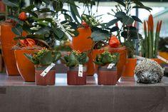 Kamerplanten met fel