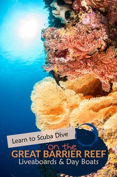Cairns Open Water Dive Courses - Learn to dive on the Reef Learn To Scuba Dive, Scuba Diving Australia, Coral Reefs, A Whole New World, Medical Prescription, Open Water, Great Barrier Reef, Cairns, Asthma