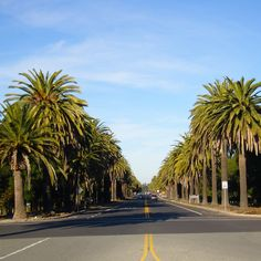 San Francisco discovered by Christopher Maland California Dates, California Palm Trees, California City, Canary Island Date Palm, Indoor Palms, Redwood Forest, Marine Life, Find Image, San Francisco