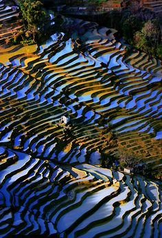 Terraced rice fields # 8 | nguyen huynh trung tin