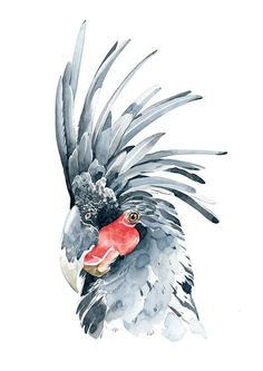 Stefan Gevers - Palm Cockatoo - Limited edition Print