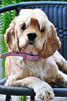 Do you have a pet that sheds huge amounts of hair? Did you think you had to just grimace and bear it? There are some solutions - one of them might work for you! Read how one of our vets dealt with it in her house.