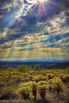 Sun Rays Shower on Joshua Trees / Cholla cactus in Sonoran Desert Scottsdale Arizona Ben Elliot. Here you relax with these backyard landscaping ideas and landscape design. Beautiful Sky, Beautiful Landscapes, Beautiful World, Beautiful Places, Scottsdale Arizona, Arizona Usa, Tucson Arizona, Images Lindas, Cool Pictures