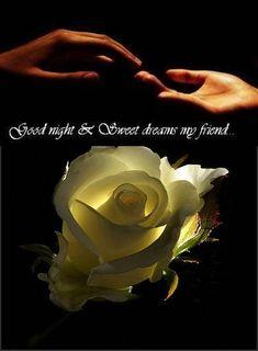 Good Night & Sweet Dreams My Friend ! Amazing Flowers, My Flower, Beautiful Roses, Flower Power, Beautiful Flowers, Pretty Roses, Good Night Greetings, Good Night Wishes, Good Night Sweet Dreams
