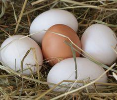 Was bedeutet der Code auf Eiern?