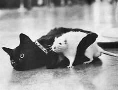 """** """" Yaz,cats and rats makes good buds. Yoo gotta learn more 'bout us."""""""