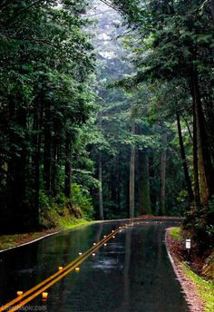 Wet road rain outdoors trees street