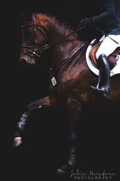 Via golden-pony on We Heart It Most Beautiful Horses, All The Pretty Horses, Horse Background, Horse Wallpaper, Funny Cute Cats, Cute Horses, Horse Pictures, Equine Photography, Show Horses