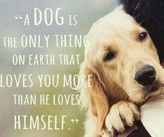 21 Inspirational Quotes Every Dog Lover Should Read