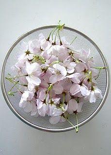 Edible flower: cherry blossoms (sakura)