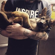 my little baby german shepherd, probably the last time I'll be able to hold him like this before he's 100lbs next week - Imgur