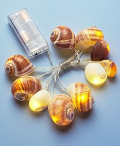 Seashell String Lights Clam Conch Crowned Coastal Beach Tropical Home Decor