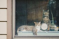 who's kitties are those in the window meow meow?