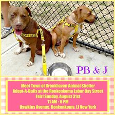 You can meet some of the Town of Brookhaven Animal Shelter Adopt-A-Bulls at the Ronkonkoma Labor Day Street Fair! Sunday, August 31st from 11 AM - 6 PM on Hawkins Avenue, Ronkonkoma, LI, New York! You have a personal invitation from these two bonded CUTIES, PB & J! Please SPREAD THE WORD! FOSTER/ADOPT PB & J! PB Listing ID #: 14-54-8362 Breed: Terrier Mix Color: Tan/White Gender: Female Age: Adult J Listing ID #: 14-54-8363 Breed: Terrier Mix Color: Chocolate/White Gender: Female Age: Adult
