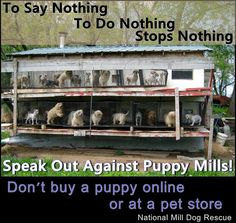 Who are you going to tell today? Spread the word far and wide about puppy mills. Wanted to share this with you guys cuz buying a pet from a pet store is BAD. do you know what they...ah you dont want to know.