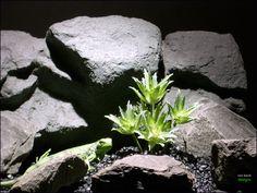reptile enclosure tank terrarium plant succulent prp066 plstc. ron beck designs #ron_beck_designs #succulent #reptile