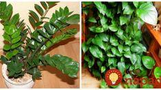 Rastliny pestujem už 20 rokov, ale takto sa im ešte nedarilo: Vďaka tomuto vyzerajú izbovky miliónovo aj keď máte doma suchý vzduch a nestojí to nič! Plant Shelves, Indoor Plants, Leaves, Gardening, Funguje To, Lawn And Garden, Yard Landscaping, Horticulture