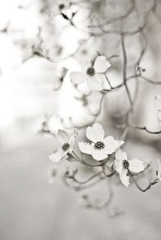 gray background - blossoms