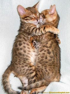 Google Image Result for http://www.innocentenglish.com/funny-pics/cute-puppy-kitten-pics/cute-snuggling-kittens.jpg