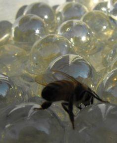 Bee-Bath-2