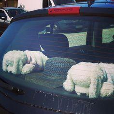Perritos tomando el sol en el coche #CaminodeSantiago #animales #peluches #pelucheando