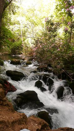 Banias Springs, Golan Heights, Israel. One of the streams that form the Jordan River.