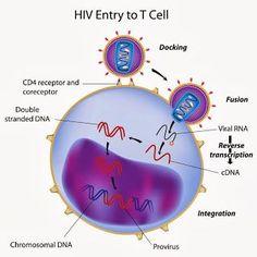 Rh Negative Blood Type Secrets: O Negative Blood & HIV Protection Delta 32