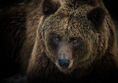 Bear by Rubén  Romero on 500px