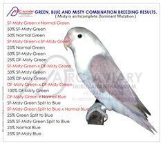 Akhilchandrika : Green, Blue and Misty Combination Breeding Results. Budgies, Parrots, Love Birds Pet, African Lovebirds, Bird Breeds, Bird Aviary, Parrot Toys, Conure, Bird Cages