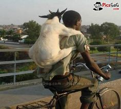Goat Boy Funny Travel  [ More Funny People Pictures: http://www.picsgag.com/funny-people/ ]