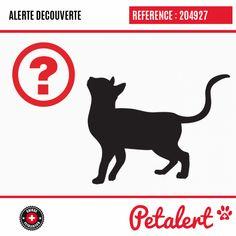 / Chat / Montereau-Fault-YonneSeine-et-Marne / France Chat Paris, Provence France, Calais France, Saint Germain, Visible, Saint Denis, Saint Laurent, Dogs, Animaux