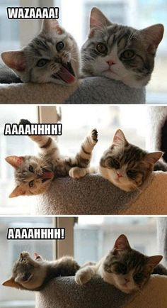 A touch of Shassy: AAAHHH KITTY!  SO CUTE!