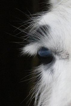 Exquisite eyelashes of a llama.  Llamas in the Raw Sanctuary. Thank you for your generous donations!