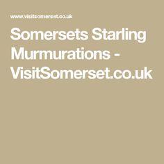 Somersets Starling Murmurations - VisitSomerset.co.uk