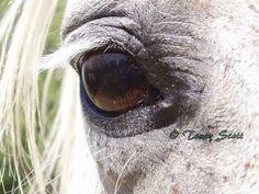 Horse Eye  Handmade card with original by UniquelyYoursStudio, $5.00