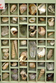 Superb Shell Collection