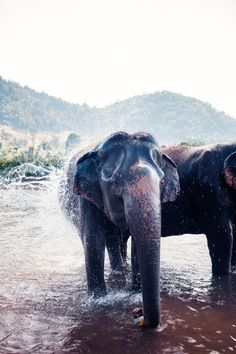 elephants for ! Elephant Life, Wild Ones, Wild Things, Cute Creatures, Beautiful World, Elephants, Mother Nature, Nature Photography, Cute Animals