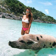 Swim with pigs at Pig Beach, Exuma, Bahamas - beaches, booze, and bungalows Bahamas Beach, Exuma Bahamas, Pig Beach, Beach Fun, National Pig Day, Feral Pig, Pig Island, Swimming Pigs, Overwater Bungalows