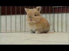 Baby Bunny Song?! This will help you get through the rest of your Friday.