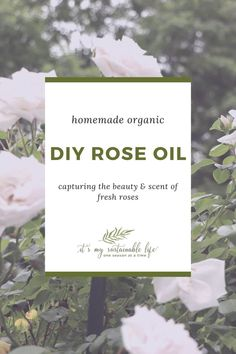 What's blooming here on the hill?  Roses! Making our own DIY rose oil & rose water is how we harness this intoxicating blooms scent for use throughout the year. After all, who doesn't love the aroma of roses? | It's My Sustainable Life @itsmysustainablelife #roseoil #roseoilbenefits #roseoiluses #roseoilforskincare #roseoilforface #roseoilrecipes #roseoilantiagingrecipes #rosewater #rosewaterrecipe #diyrosewater #itsmysustainablelife Rose Oil Benefits, Bath Benefits, Natural Home Remedies, Natural Healing, Herbal Remedies, Holistic Healing, Rose Oil For Skin, Spiritual Decor, Herbs For Health