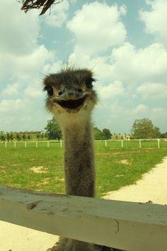 #ostrich =D