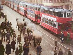 Elephants meet London transport trams near the Elephant and Castle circa Vintage London, Old London, East London, Asian History, British History, London Transport, Public Transport, Old Pictures, Old Photos
