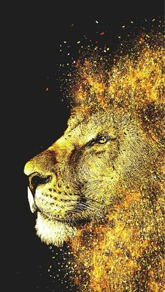 Pin by Tiere Malen Ideen 2020 on Tiere Malen in 2020 Lion Images, Lion Pictures, Tier Wallpaper, Animal Wallpaper, Apple Wallpaper, Print Wallpaper, Black Wallpaper, Afrique Art, Owl Canvas