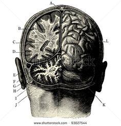 """Humain brain -vintage engraved illustration - """"Manuel des hospitalière et des garde-malaldes""""  edited by  Librairie Poussielgue - Paris 1907"""